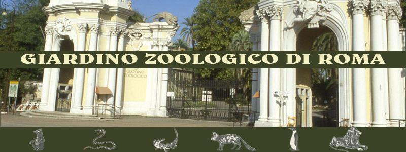 bioparco giardino zoologico in villa borghese roma bed